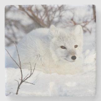 Arctic Fox in winter Stone Coaster