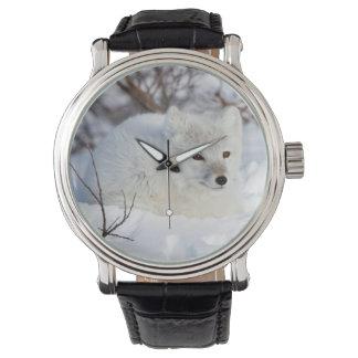 Arctic Fox in winter Watches