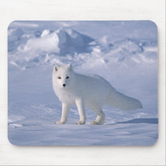 Arctic Fox Mouse Mat