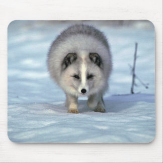 Arctic Fox on snow Mouse Mat