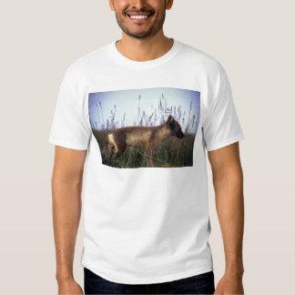 Arctic Fox on summer tundra Tee Shirts