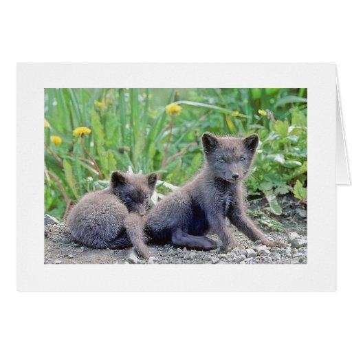 Arctic Fox Pups Photo Card
