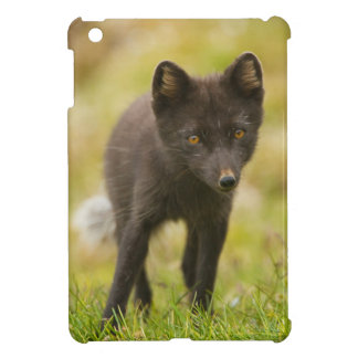 Arctic fox searches for food cover for the iPad mini