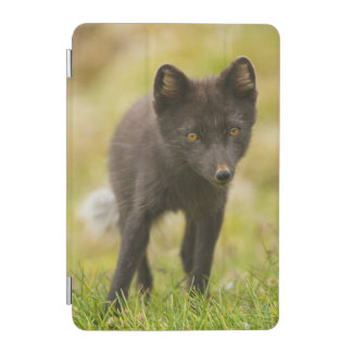 Arctic fox searches for food iPad mini cover