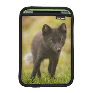 Arctic fox searches for food iPad mini sleeve