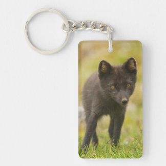 Arctic fox searches for food key ring