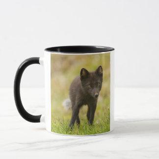 Arctic fox searches for food mug