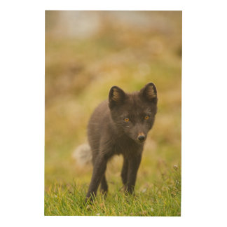 Arctic fox searches for food wood wall art