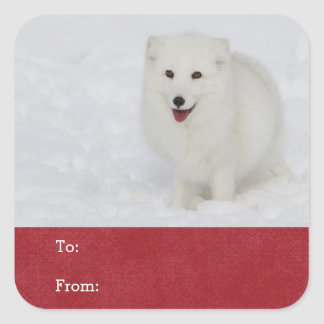 Arctic Fox Sticker