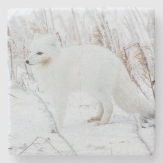 Arctic Fox Stone Beverage Coaster