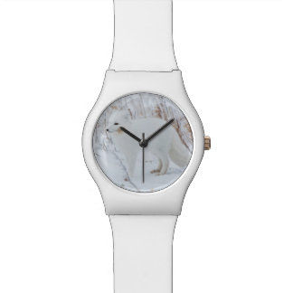 Arctic Fox Watches