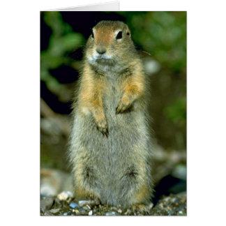 Arctic Ground Squirrel Card