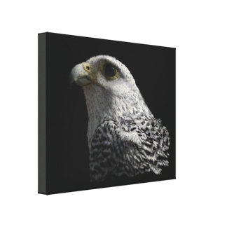Arctic Gyrfalcon Gallery Wrapped Canvas