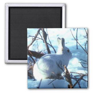 Arctic Hare in Snow Square Magnet