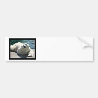 Arctic Polar Bear Bumper Sticker
