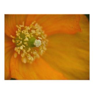 Arctic Poppy • Card Invitation