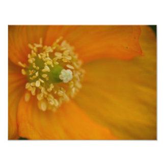 Arctic Poppy • Card / Invitation