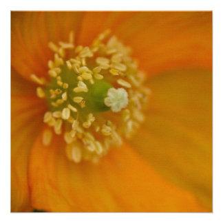 Arctic Poppy • Square Card Invitation