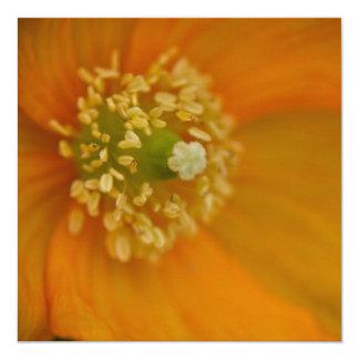 Arctic Poppy • Square Card / Invitation