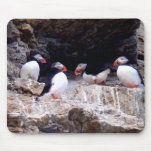 Arctic Puffins Mousepads