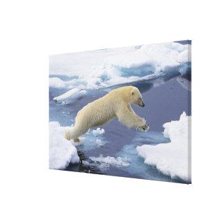 Arctic, Svalbard, Polar Bear extending and Canvas Print