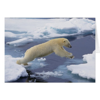 Arctic, Svalbard, Polar Bear extending and Card