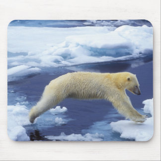 Arctic, Svalbard, Polar Bear hovering with all Mouse Mat