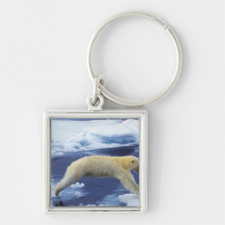 Arctic, Svalbard, Polar Bear hovering with all Silver-Colored Square Key Ring