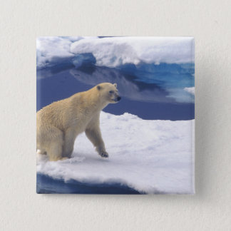 Arctic, Svalbard, Walrus being freindly 15 Cm Square Badge