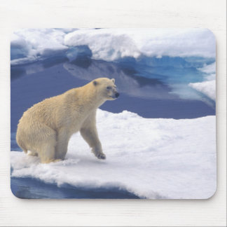 Arctic, Svalbard, Walrus being freindly Mouse Mat