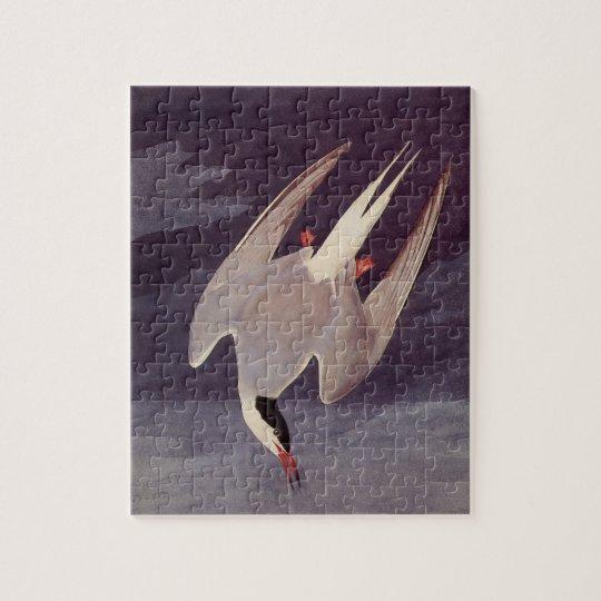 Arctic Tern by John James Audubon, Vintage Birds