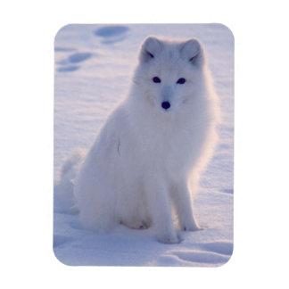 Arctic Winter Fox Photo Designed Rectangular Photo Magnet