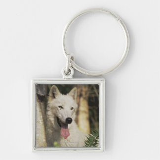 Arctic wolf in forest Silver-Colored square key ring