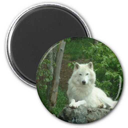 Arctic Wolf Magnet Magnet