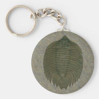 Arctinrus Boltoni Fossil Trilobite Key Ring