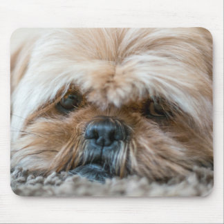 Are we ready for playtime yet? mouse pad
