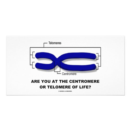 Are You At The Centromere Or Telomere Of Life? Personalised Photo Card