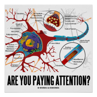 Are You Paying Attention? (Neuron / Synapse) Poster
