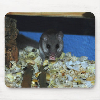 Arfrican Dwarf Dormouse Mouse Pad