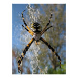 Argiope Spider Posters