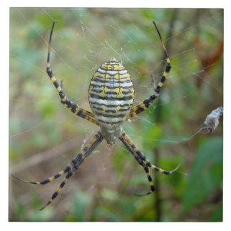 Argiope trifasciata Orb Weaver Spider Tile