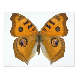 Argus Butterfly 11 Cm X 14 Cm Invitation Card