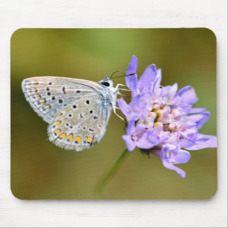 Argus butterfly on flower mouse pad