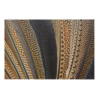 Argus Pheasant wing feathers 2 Wood Print