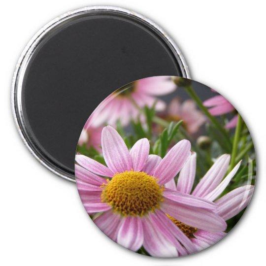 Argyranthemum frutescens Marguerite Daisies 6 Cm Round Magnet
