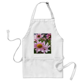 Argyranthemum frutescens Marguerite Daisies Aprons