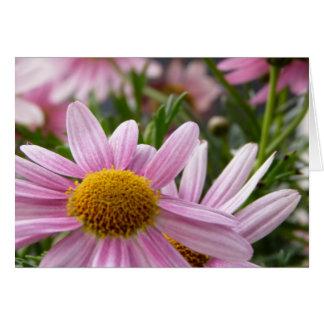 Argyranthemum frutescens Marguerite Daisies Card