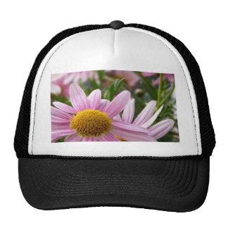 Argyranthemum frutescens Marguerite Daisies Trucker Hats