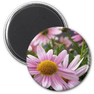 Argyranthemum frutescens Marguerite Daisies Refrigerator Magnets