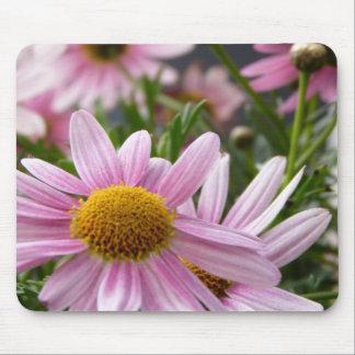 Argyranthemum frutescens Marguerite Daisies Mousepad